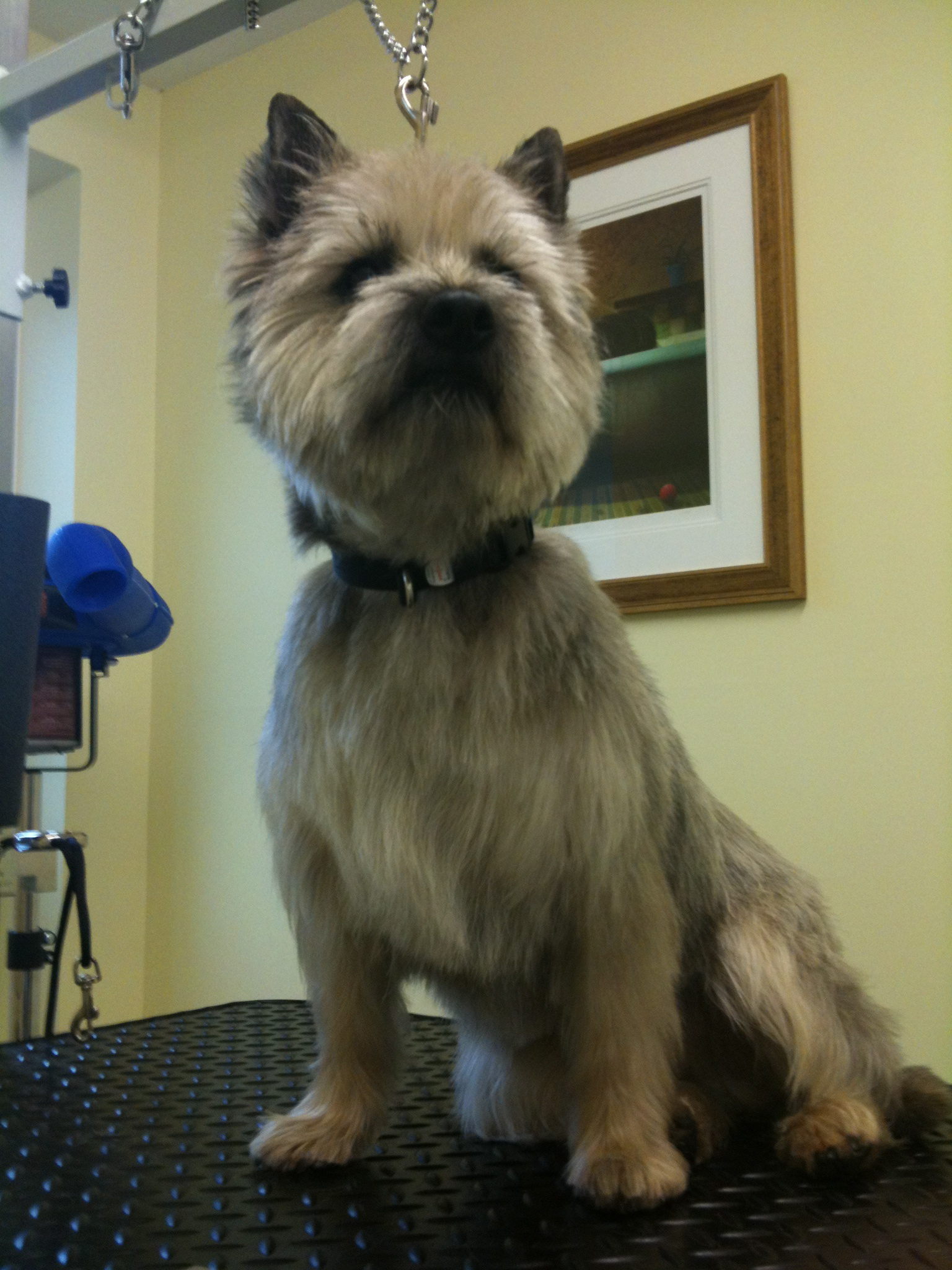 Top Tails Dog Grooming Warwick