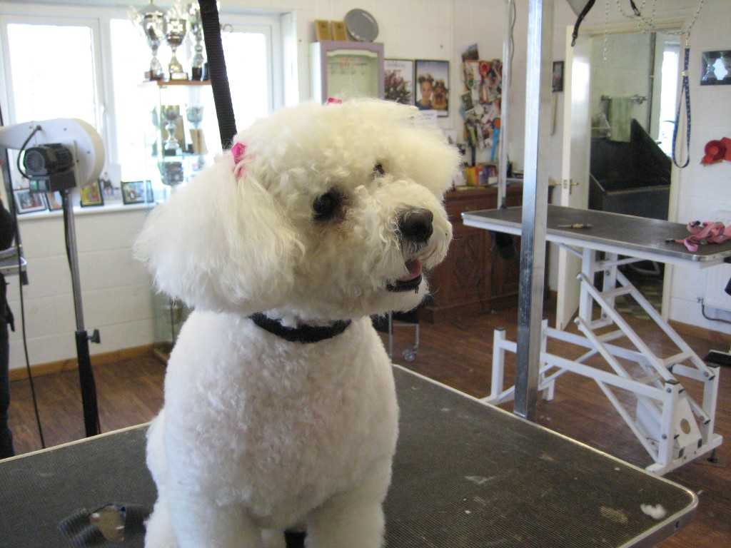 Dog grooming Warwick