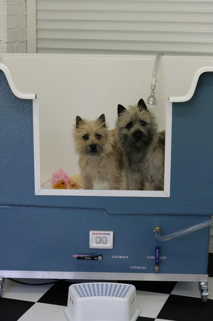 Dog groomers in warwick