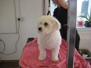 Top Tails Dog Grooming Warwick